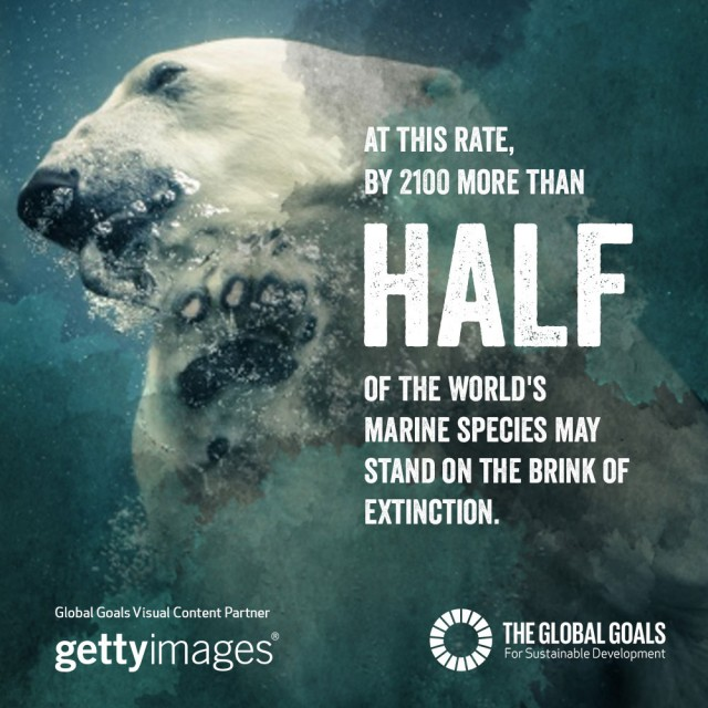 At this rate by 2100 more than half of the world's marine species may stand on the brink of extinction